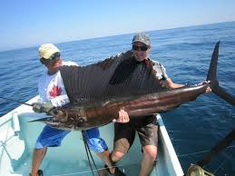 Image result for the sailfish