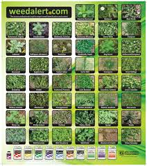 Weed Alert View Detailed Color Photos Of Over 100 Weeds