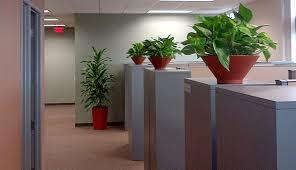 office cubicle plants. office plants cubicle r