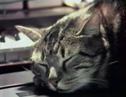 cats chris marker • essay • senses of cinema cat listening to music