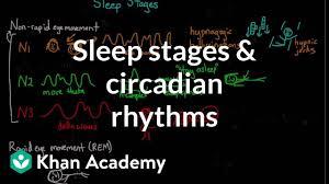 Ideal Sleep Cycle Chart Sleep Stages And Circadian Rhythms Video Khan Academy