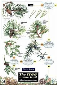 Identification Chart For Leaves Id Chart Tree Name Trail