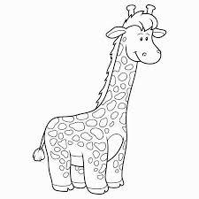 Giraffen Fotos Afbeeldingen En Stock Fotografie 123rf
