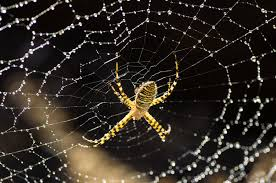 Znalezione obrazy dla zapytania spiderweb
