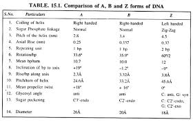 essay on dna meaning features and forms genetics comparison of a b and z forms of dna