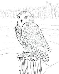 Asapcontractingusacom Page 318 Barn Owl Coloring Pages Soccer