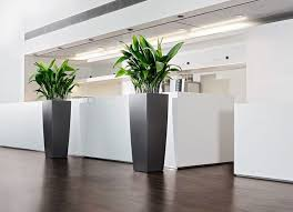 tall office plants. modern tall indoor plants google search office