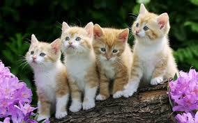 Мачки Images?q=tbn:ANd9GcSiKzEFeyzRlGJH1W1w_qAaLmzGPRIa-X-54lIZgdQj_e-BJB7X