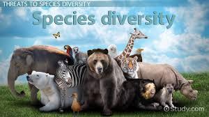 Species Diversity Definition What Is Species Diversity Definition Importance Examples