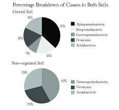 Soil Percentage Chart Pie Charts Representing The Class Diversity In The Control