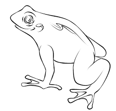 tree frog template frog template animal templates free premium templates