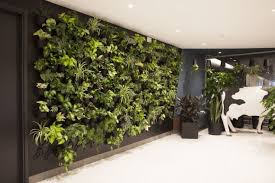 office plant displays. Perfect Office The Startup Designing Breathtaking Office Plant Displays For Tech Giants Intended C