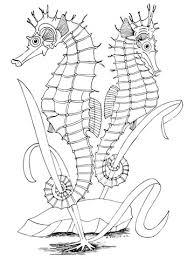 Disegno Di Due Cavallucci Marini Da Colorare Disegni Da Colorare E