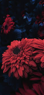 Red flower for iPhone x – iOSwall