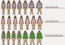 Body Type Chart I Love Fun Female Body Type Chart
