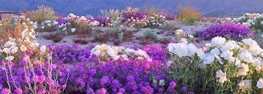 Resultado de imagem para flores no deserto