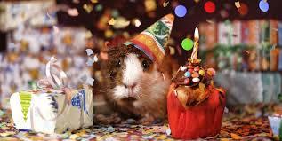 A Non Milestone Birthday Choosebetterlife