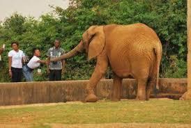 Only Six Animals, 10 Birds In Port Harcourt Zoo, Zero Alocations In 5 Years  – Adahor