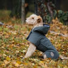4 Great Products To Protect Your Dog From Weather