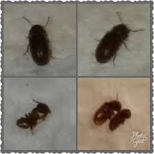 here s a better picture of those bugs i spray them and their starting to