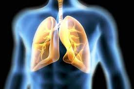 Image result for lungs images