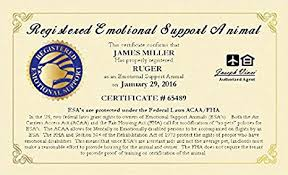 Amazon Com Working Service Dog Brand Official Emotional Support