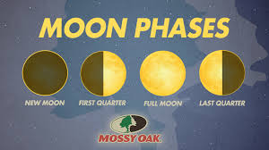 Deer Movement Chart Oklahoma The Effect Moon Phase Has On Hunting Deer Mossy Oak