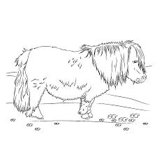Shetlander Kamer Ise Kleurplaten Paarden En Spelletjes