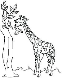 Colouring Book Images For Adults Giraffe Adult Coloring Book Giraffe
