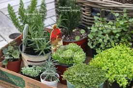 plant a fairy container garden