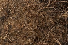 dark dirt texture seamless. Textures Dark Dirt Texture Seamless