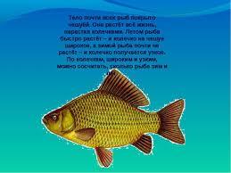 Конспект урока по окружающему миру кто такие рыбы класс  Тело почти всех рыб покрыто чешуёй Она растёт всё жизнь нарастая колечками