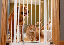 finding the best tall pet gate