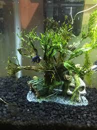 Seachem Planted Aquarium Dosing Chart Getting Seachem Flourish This Weekend Dosing Plant