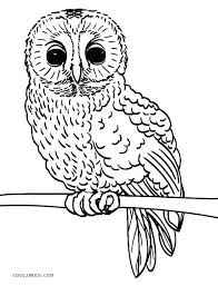 Owl Coloring Pages For Kids A Owl Coloring Pages For Kids Or Owl
