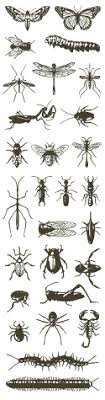 Bug Id Chart Welcome To Bugguide Net Bugguide Net