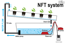 nutrient technique for hydroponic