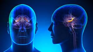 Beynin intiharı: İntihar edenin beyninde neler oluyor? ile ilgili görsel sonucu