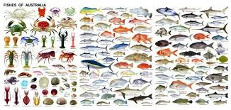 Australian Reef Fish Species Chart Australian Fish Species Fish Chart Fish Types Of Fish