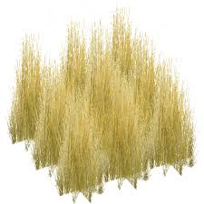 tall grass png Google Search Texture Pinterest Architecture