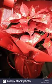 Weihnachtsstern Mit Glitzer Verziert Stockfoto Bild