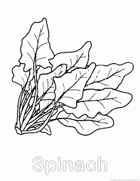 Small Picture Spinach Coloring Coloring Coloring Pages