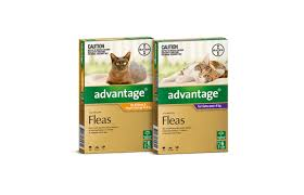 Advantage Dosage Chart For Cats Advantage For Cats Kittens Fast Acting Flea Prevention