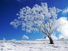 winter backgrounds for desktop. Beautiful Winter Winter Backgrounds  Free Download Scenery PowerPoint  E  To For Desktop 4