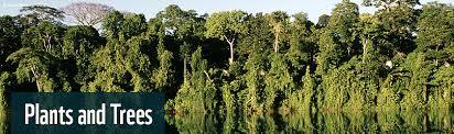 amazon rainforest tree leaves. Andr Brtschi WWF On Amazon Rainforest Tree Leaves