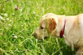 Gelenkentzündung hund medikamente