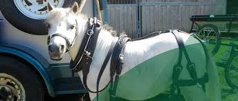 Horse Shipping Quotes Amazing Welcome To Fairway Horse Transport