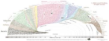 Earth Evolution Chart This Hypnotically Beautiful Chart Shows All Life On Earth