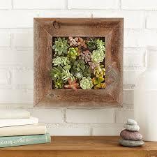 how to make a succulent vertical living wall art