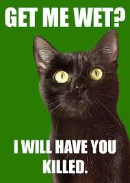 The World's Richest Cat Meme - Holytaco via Relatably.com
